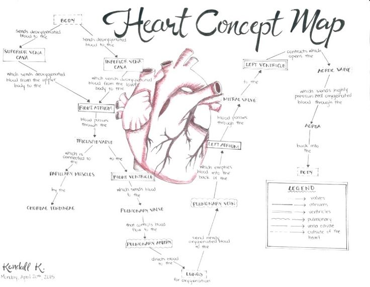 fleurrishing: An Anatomical Heart Concept Map I did for