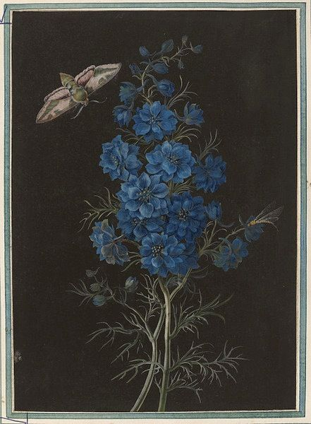 Studies of a delphinium, hawk-moth, and caddis fly. (via Victoria & Albert Museum)