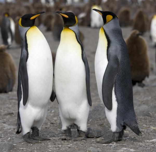 Pin En Antartida