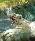 Siegfried and Roy Secret Garden and Dolphin Habitat at the Mirage Las Vegas