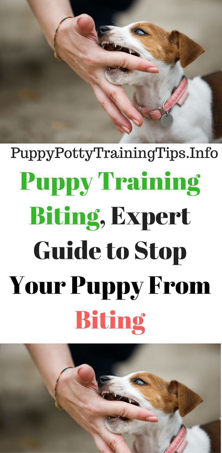 Dog training 101 how to train your dog puppy training