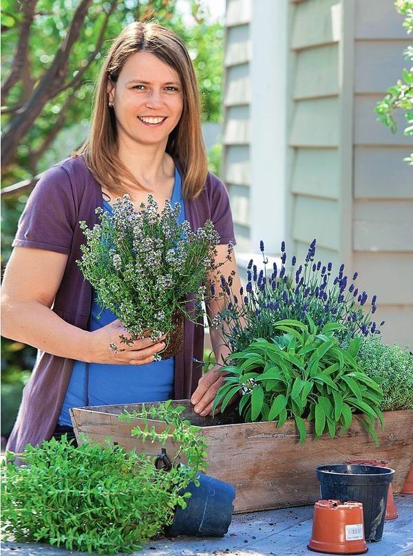 Многие пряные травы отлично растут не только в открытом грунте, но и в горшках.