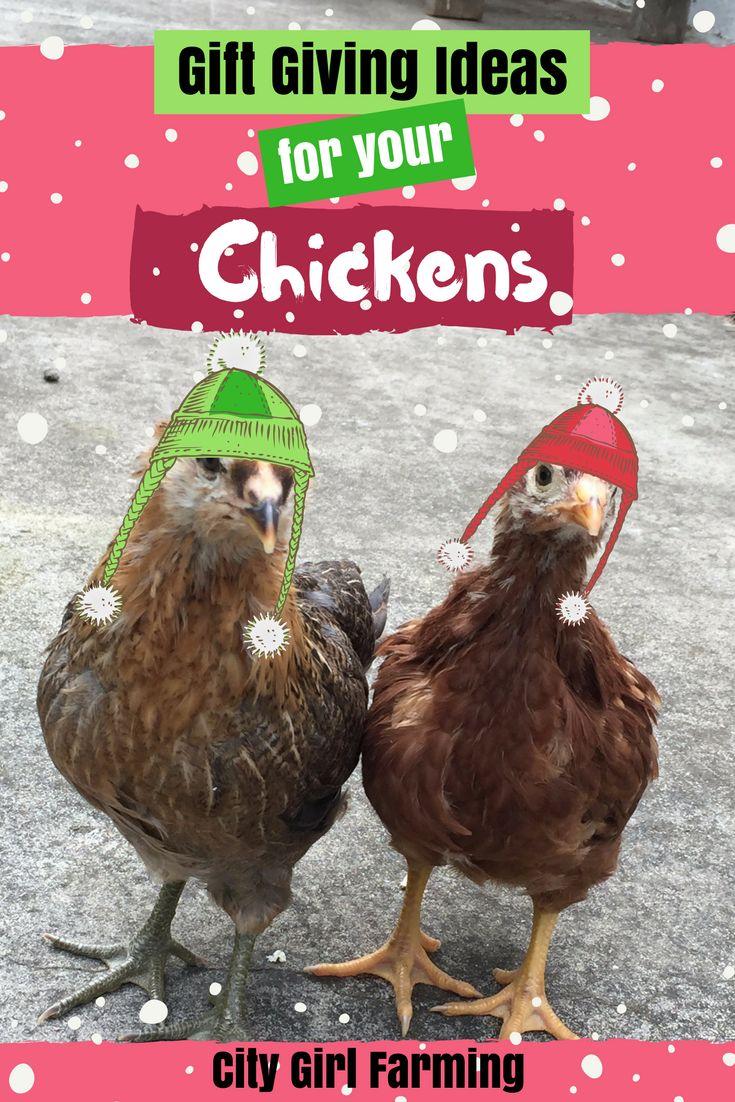 353 best i heart chickens images on pinterest backyard