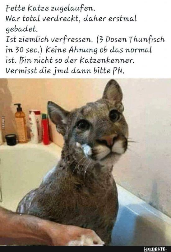 Fette Katze zugelaufen.. | Bilder | Funny cats, Found cat ...