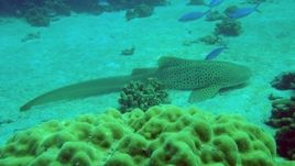 Sites : Shark point : (18 m-50 M)  tombant situé au large de Nosy Be, visibilité souvent meilleure que sur les autres sites 20-40 Mètres, corail correct mais l'intérêt de cette plongée est le pélagique et les requins de récif: requin baleine, baleines à bosse souvent vues du bateau entre les 2 plongées, requins queue noire, requins gris, requins pointe blanche de récifs, parfois requins marteau, raies manta, mobula...