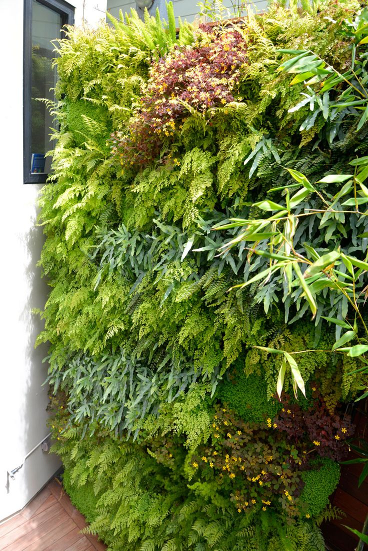 Vertical garden design with orchids space saving backyard landscaping - Florafelt Pro System Vertical Garden Design By Tim O Shea
