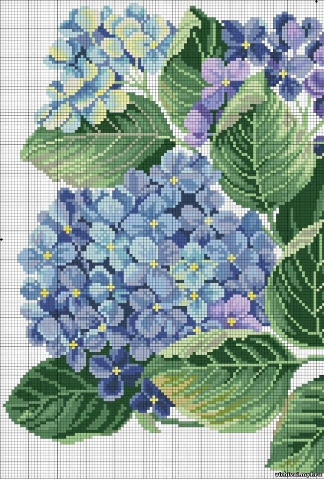 Hortensias bleues