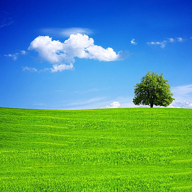 Grass Trees Blue Sky Background Beautiful Images Nature Blue Sky Background Beautiful Nature Wallpaper