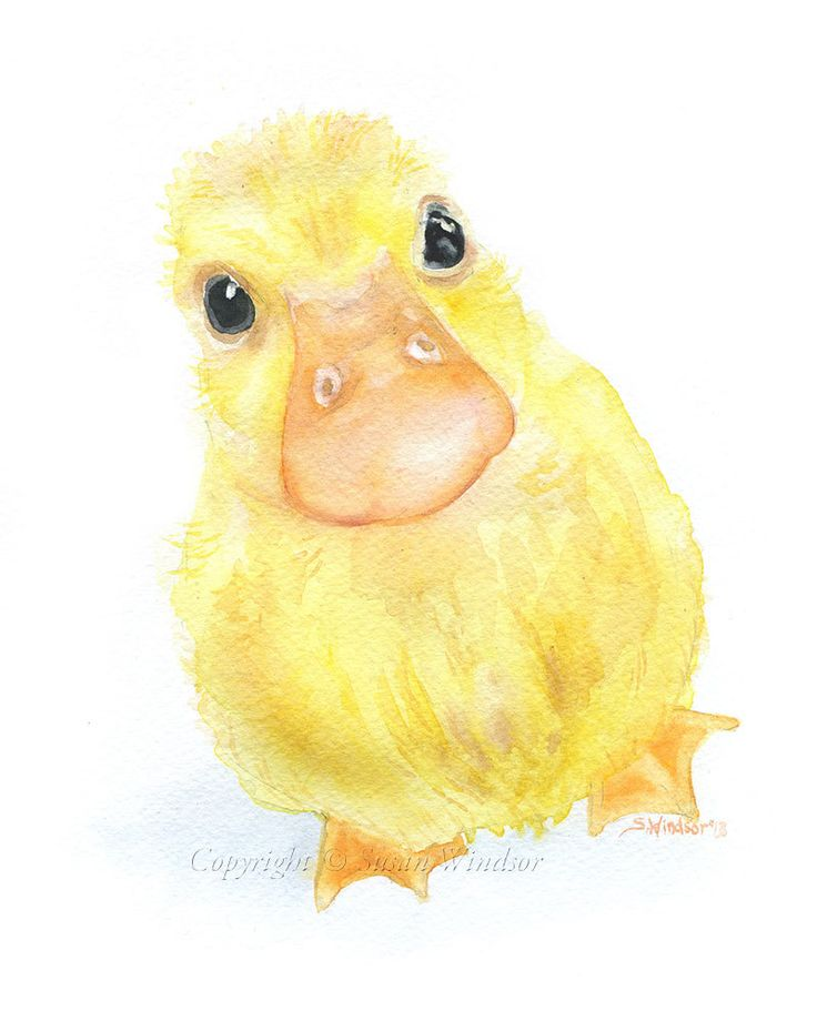 Duckling Original Watercolor Painting 8x10 Nursery Duck Fine Art. by awesome Susan Windsor via Etsy.