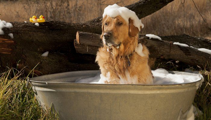 How To Make Dog Shampoo at Home: Guide and Tips - Top Dog Tips