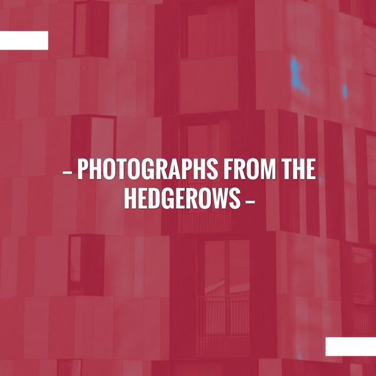 Check out my new post! Photographs from the Hedgerows :) http://thebeautyaroundus.blog/2017/08/30/photographs-from-the-hedgerows/