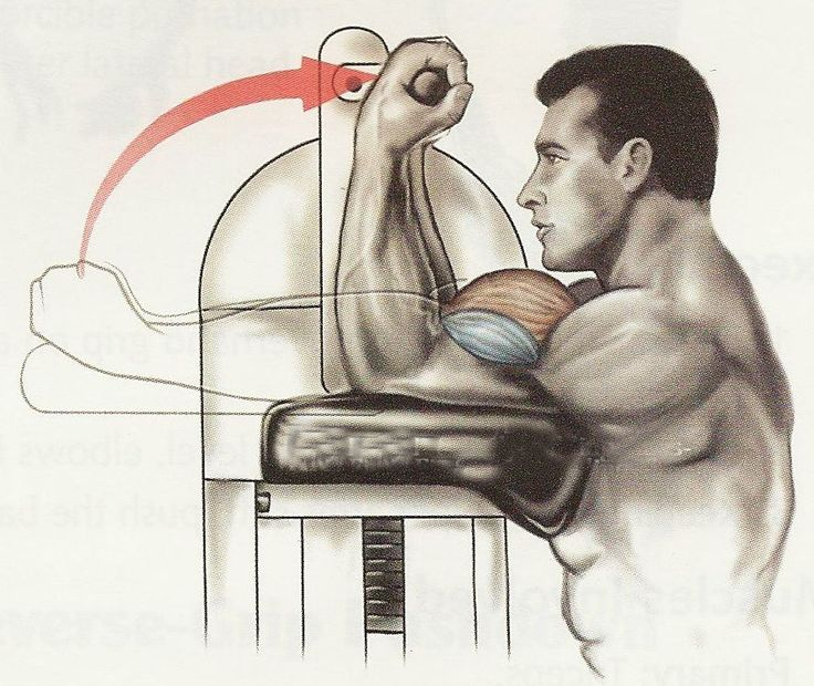 bicep machine exercises