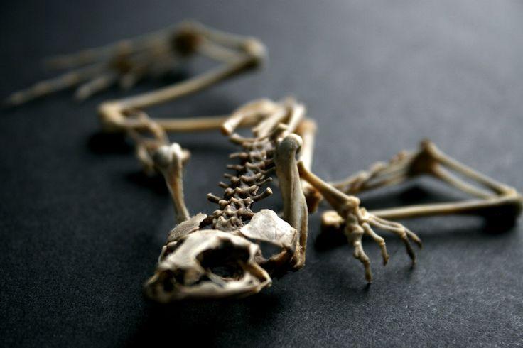 62 besten Bone Structure Bilder auf Pinterest | Anatomie, Knochen ...