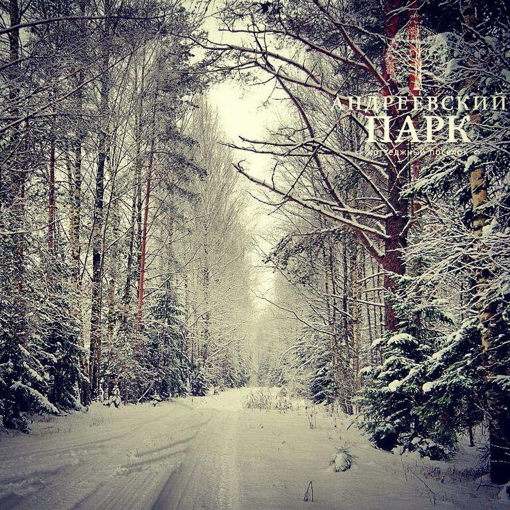 Зима в Андреевском Парке