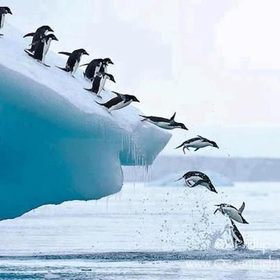 ✿ ❤ It's sad to see beauty like this knowing their environment is melting....