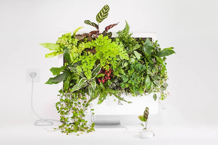 PLANT YOUR MAC | MACETEROS CON COMPUTADORES EN DESUSO #Basural #LaBasuraNoExiste #Reuse