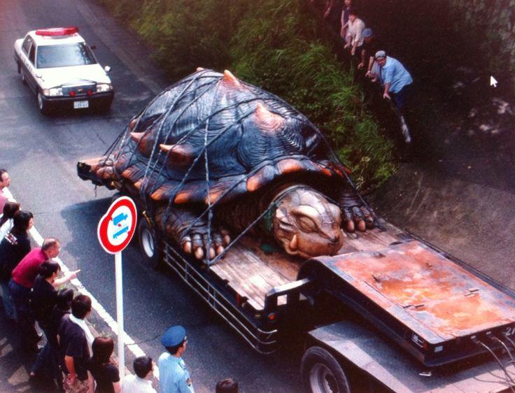 "Reuzenschildpad, reminds me of ""Morla"""