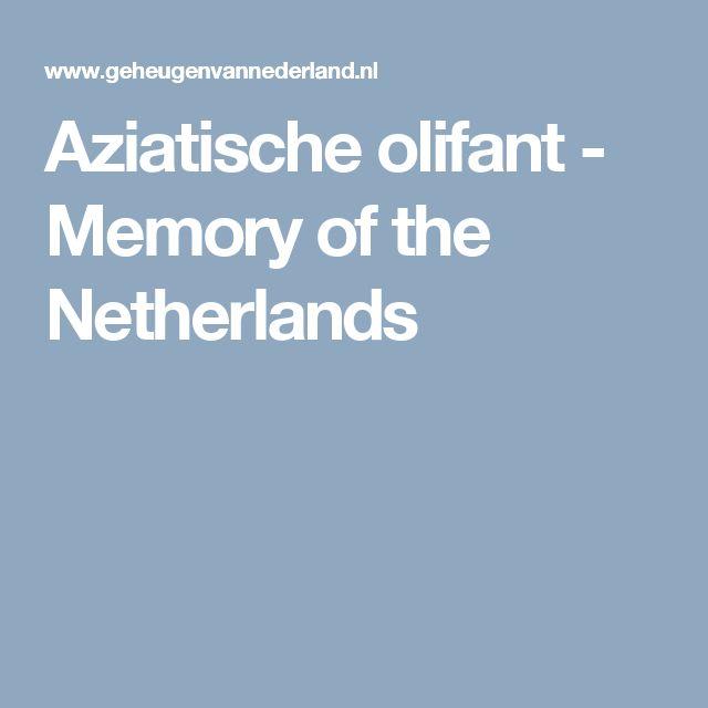 Aziatische olifant - Memory of the Netherlands