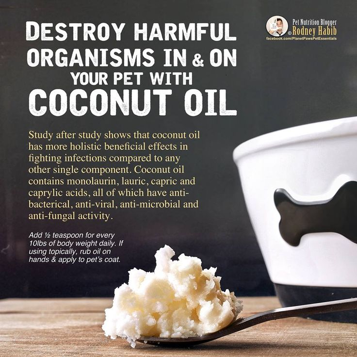 Coconut oil contains monolaurin, lauric, capric and caprylic acids, all of which have anti-bacterical, anti-viral, anti-microbial and anti-fungal activity.  Hence the nickname: nature's antibiotic. An added benefit is that there are none of the harmful side effects that drugs normally offer.  Because of its bacteria and fungus killing properties, coconut oil is being used holistically to help prevent and kill off yeast problems ailing a pet. Details here: