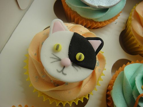 Catsparella Cat Cupcake Tuesday