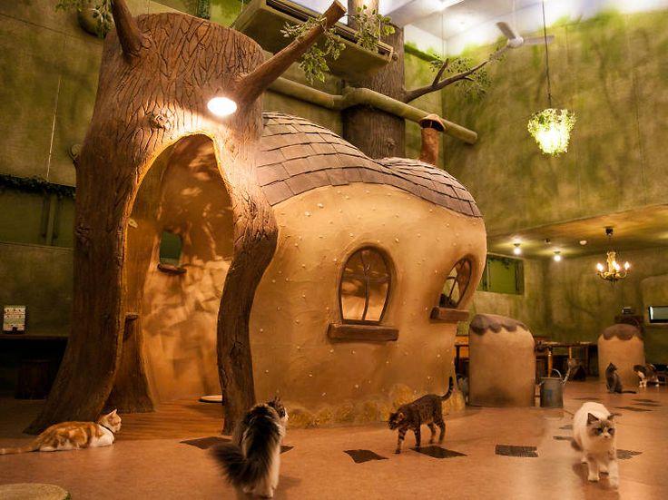 Best animal and pet cafés in Tokyo