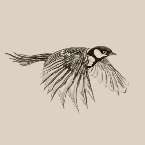 Flying bird drawing tumblr - photo#11