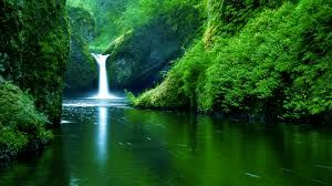 Image result for wallpaper hd nature