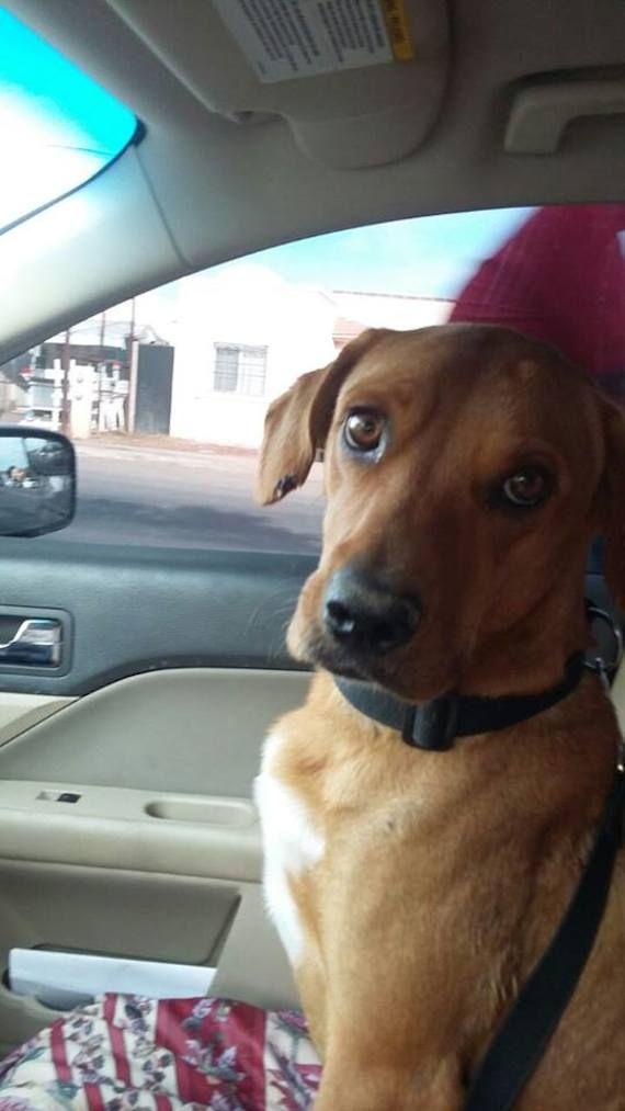 La historia de Boby, un perro con tumores es rescatado en Sonora, México http://www.sinembargo.mx/09-02-2015/1242382