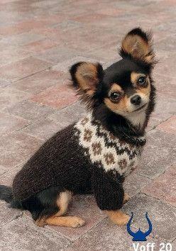 Istex Dog Sweater - knitting kit - Wool Knitting Kit - Wool Sweaters