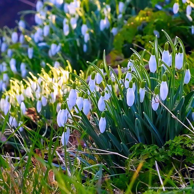 Весна картинки гиф