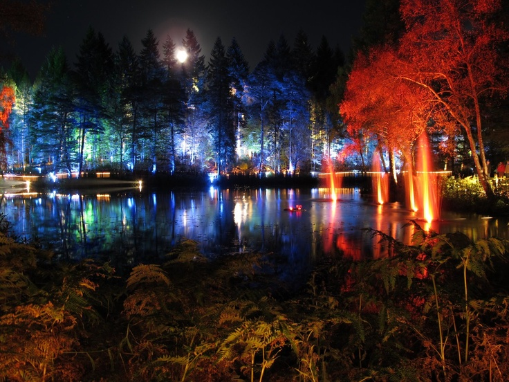 The enchanted forest, Pitlochry, Scotland