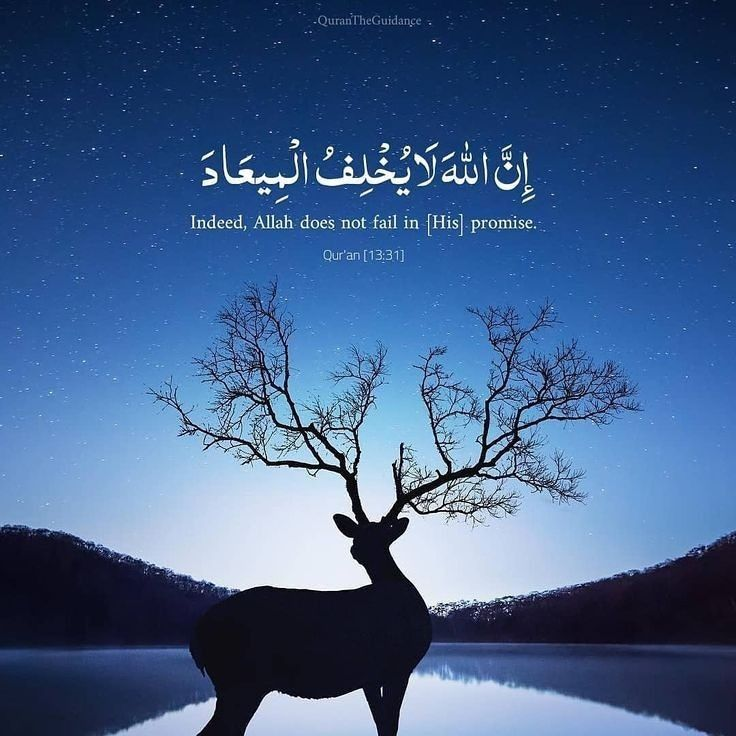 pin by on islamic quotes wallpaper