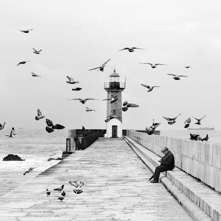 """""""Hitchcock and his birds"""" by Pedro Díaz Molins, via 500px."""