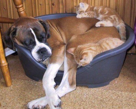 Big dog....little bed.