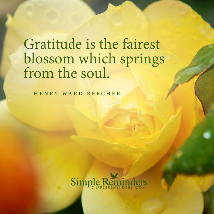 Gratitude blossom