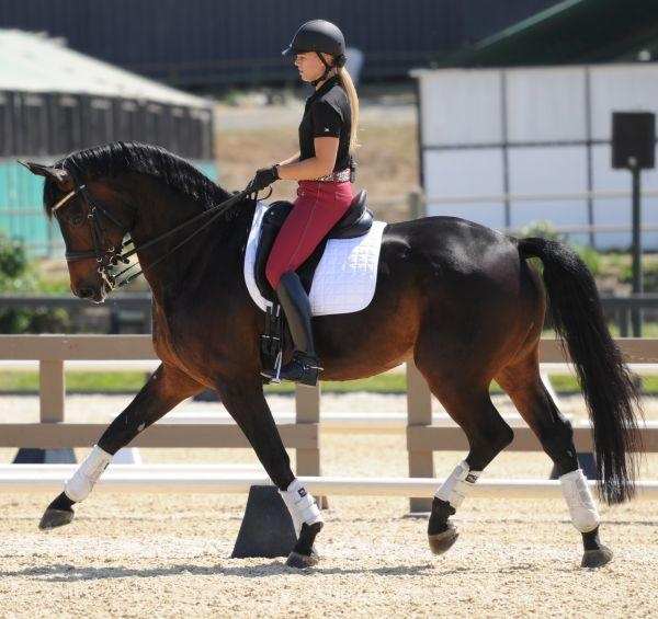 "Top young rider Brandi Roenick on Weltino's Magic. Brandi's trainer Steffen Peters rode ""Magic"" to Pan American Games individual and team gold medals prior to Brandi leasing him."