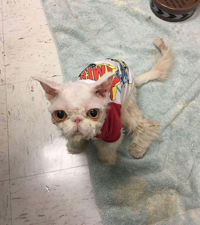 персидские кошки-5-фунт-меха-ковер-Синдбад-3