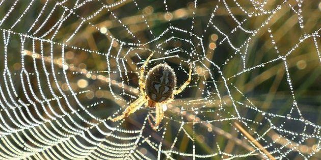 #A pesar de las fobias, las arañas no son maléficas - Diario La Verdad: Diario La Verdad A pesar de las fobias, las arañas no son maléficas…