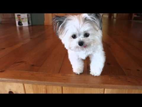 Norbert Loves Cheese (CUTE VIDEO) | Cute Tube Videos Norbert has picture books! www.pollyparkerpress.com