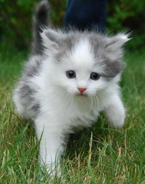 FINN – Kattunge, venter katten din barn? Eller er kattekullet kommet? Ta gjerne kontakt