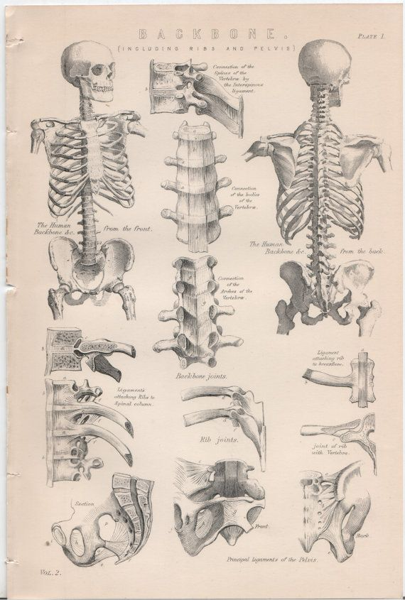 Set of 4 Vintage Anatomy Plates The Back Bone by WorldofRareBooks