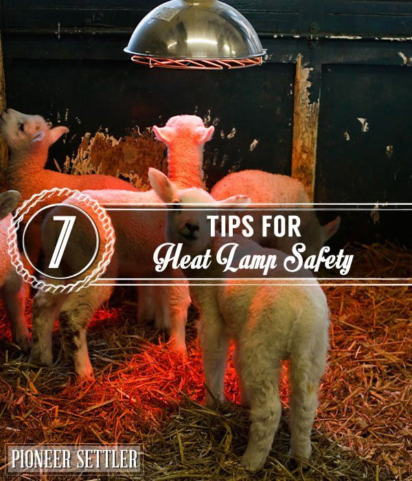 7 Tips For Heat Lamp Safety | Homesteading Tips and Ideas by Pioneer Settler at http://pioneersettler.com/heat-lamp-safety-tips/