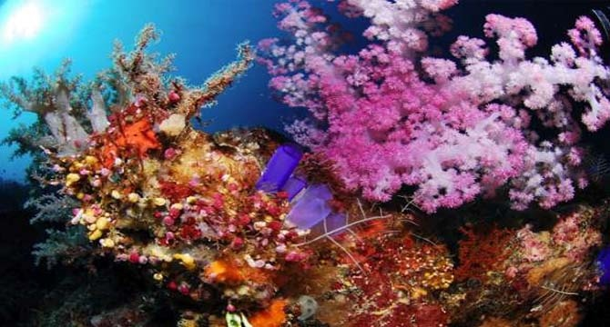 Maratua Island Diver's Paradise