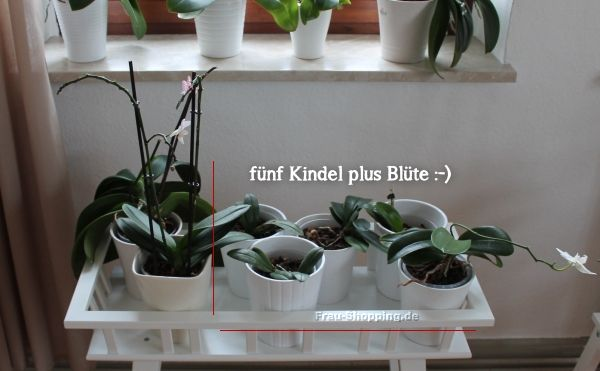 1000 images about garten pflanzen on pinterest gardens. Black Bedroom Furniture Sets. Home Design Ideas