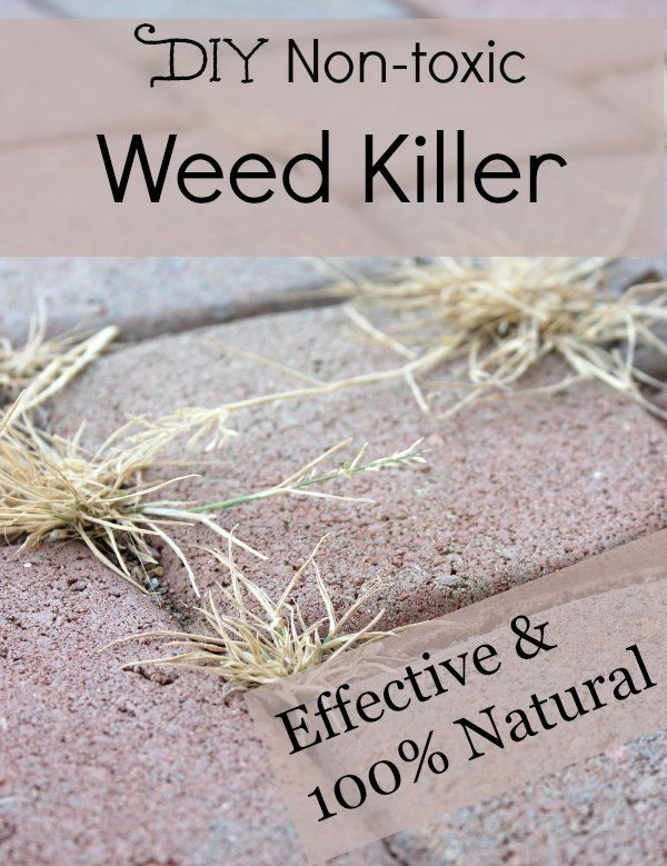 DIY non-toxic 100% natural weed killer.
