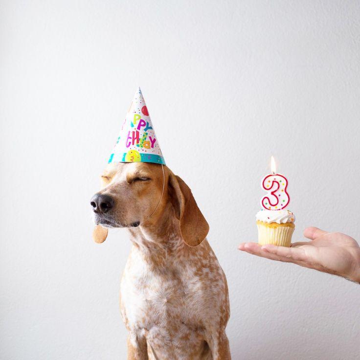 фото собак на день рождения разместила фотографию