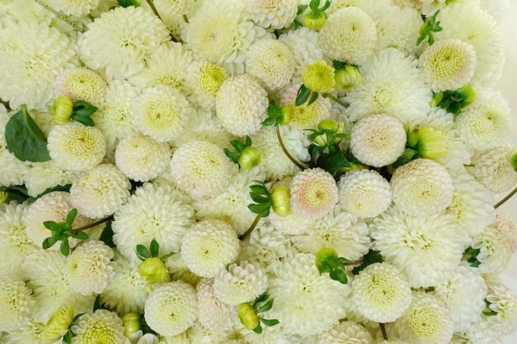 HappyFace313-Louis-Vuitton-les-parfums-chrysanthemum-chrysanthemen
