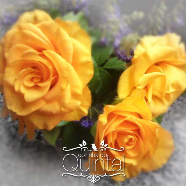 Rosas Amarelas da Cozinha do Quintal