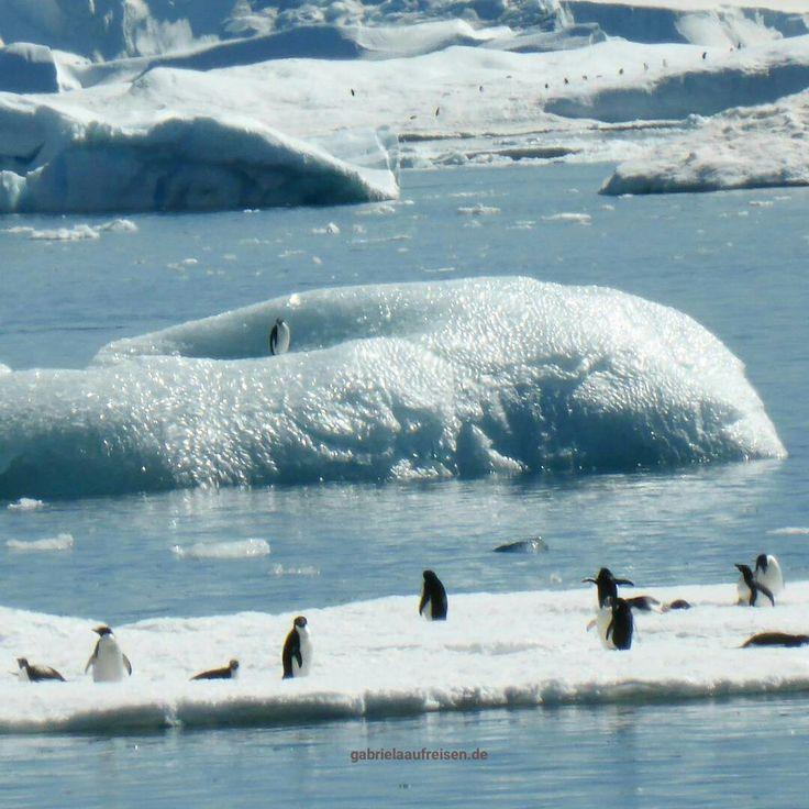 Adélie Penguins in Antarctica