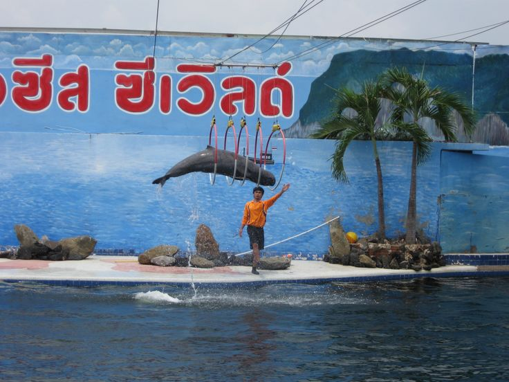 Dolfijnen show